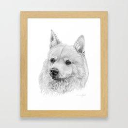 Norwegian buhund Framed Art Print