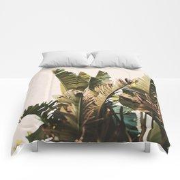 Equatorial Comforters