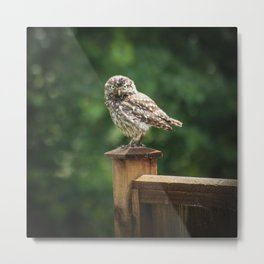Little Owl Metal Print