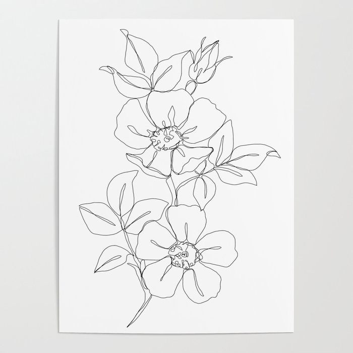 Flower Line Art Images: Rose Poster By Thecolourstudy