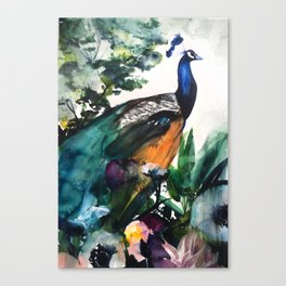 Peacock Garden Canvas Print