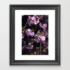 Goodnight Sakura  Framed Art Print