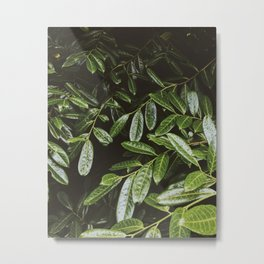 Leaves by Andrew McSparran Metal Print