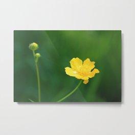 Swamp Buttercup Wildflower Metal Print