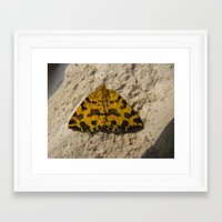 moth Framed Art Prints featuring moth by giol's