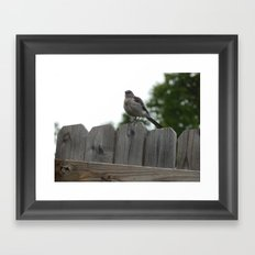 Mockingbird Framed Art Print