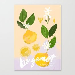 Botanical Diagram: Bergamot Canvas Print