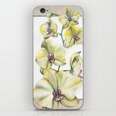 Yellow Orchid iPhone & iPod Skin