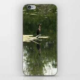 Double-crested cormorant  iPhone Skin