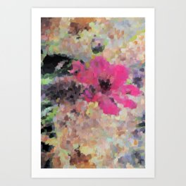 Cosmea atrosanguinea Art Print