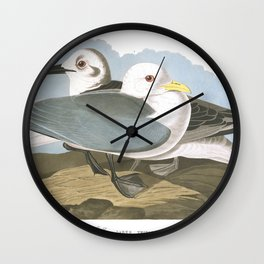 Kittiwake gull, Birds of America, Audubon Plate 224 Wall Clock