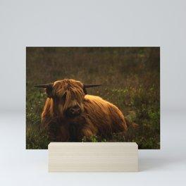 Scottish Highland hairy cow Mini Art Print