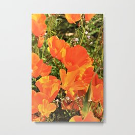 Orange Gold California Poppies by Reay of Light Metal Print