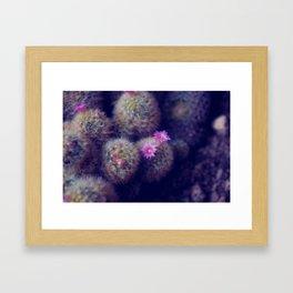 Little Cactus Flowers Framed Art Print
