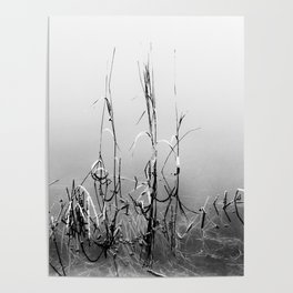 Echoes Of Reeds 1 Poster