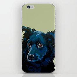 Austrailian Shepherd iPhone Skin