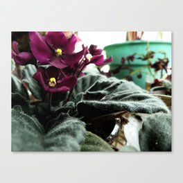 To Be Warm In Winter Canvas Print