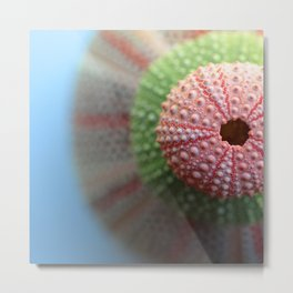 Stacked Urchins... Metal Print