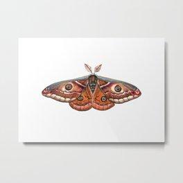 Small Emperor Moth (Saturnia pavonia) Metal Print