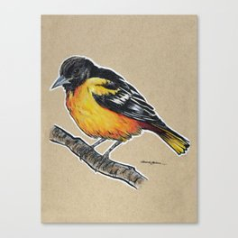 State Bird Series: Maryland - Baltimore Oriole Canvas Print
