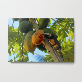 Toucanette and Papaya Metal Print
