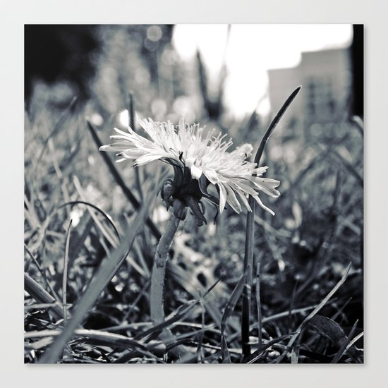 South Park dandelion Canvas Print