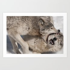 Acupuncture - Timber Wolves Art Print