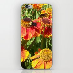 Sweet as a Bee and Daisies iPhone & iPod Skin
