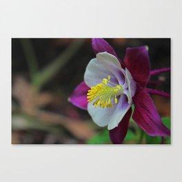 Saffron Stamens I Canvas Print