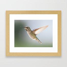 Perfect Posed Hummingbird Framed Art Print