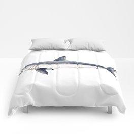 Porbeagle shark (Lamna nasus) Comforters