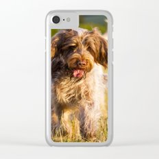 Brown Roan Italian Spinone Dog in Action Clear iPhone Case