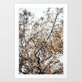 Fading autumn Art Print