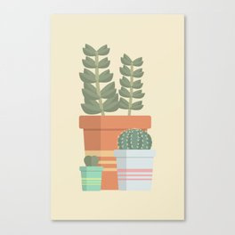 A collection of succulents Canvas Print