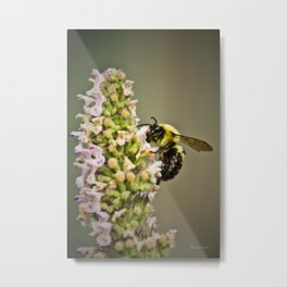 A Bumble Bee Working Metal Print