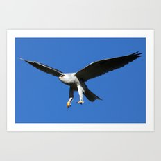 Kite in Flight Art Print
