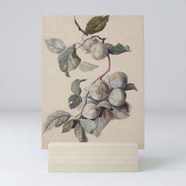 Branch of White Plums by Jacob van Eynden Mini Art Print