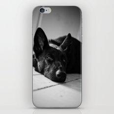 Dog German Shepherd  iPhone & iPod Skin