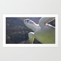 turtles Art Prints featuring Turtles by Irene Jaramillo