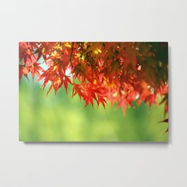 Colorful Red Japanese Maple In Fall Photography Metal Print