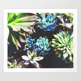 So many succulents, so little time. Art Print