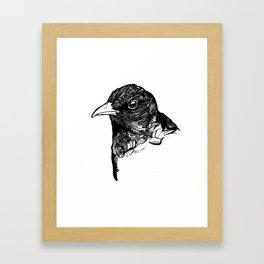 Ochrebeak Framed Art Print