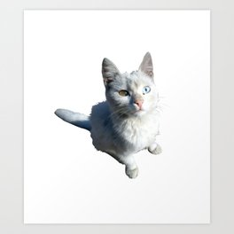 Cat with different eyes Art Print