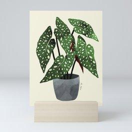 begonia maculata interior plant Mini Art Print
