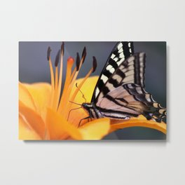 Swallowtail Butterfly On A Lily Flower Metal Print