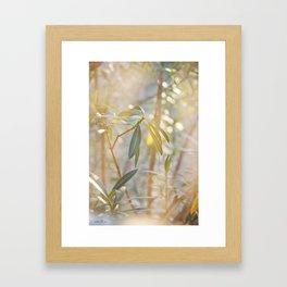 Oleander Glow © Vicki Ferrari Framed Art Print