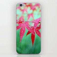 maple leaves iPhone & iPod Skin
