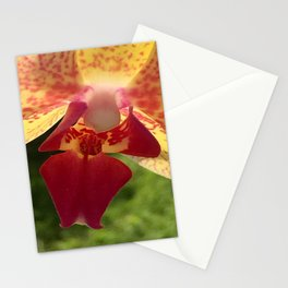Yellow Orchid Flower Blossom from Mexico Stationery Cards