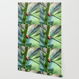 Lady Bird Wallpaper