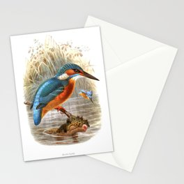 Vintage print,colorful poster of Kingfisher Stationery Cards